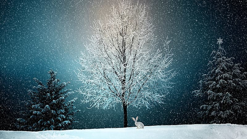 Photo of rabbit near withered tree with snow