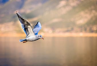 Blue and white bird flying over the lake