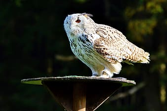 Selective focus photography of owl on round brown table