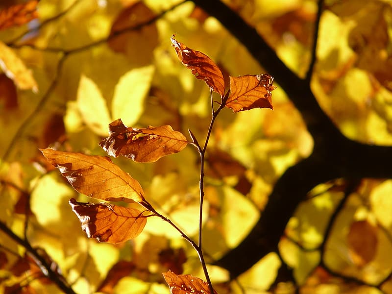 Selective focus photo of brown leaves