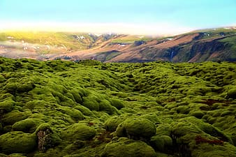 High angle view of green trees on mountains