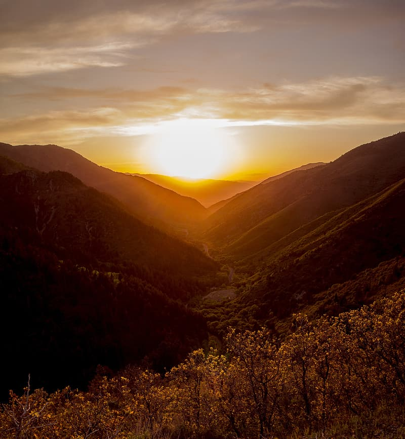 Photo of yellow flowers on mountains during golden hour