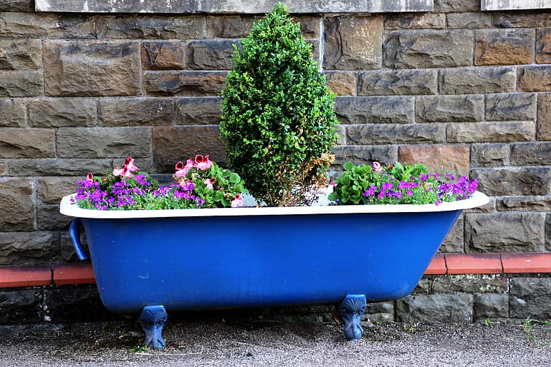Assorted-color flowers on blue bathtub near wall at daytime