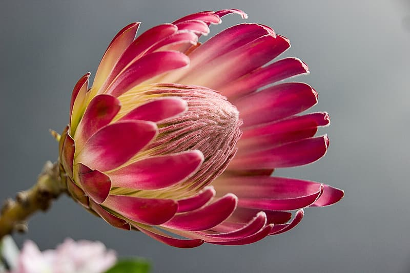 Pink-and-yellow flowers photography