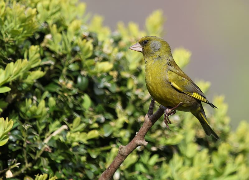 Green and yellow bird perched on tree twig