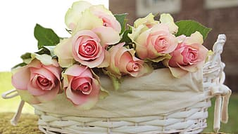 Pink and white roses arrange in wicker white basket