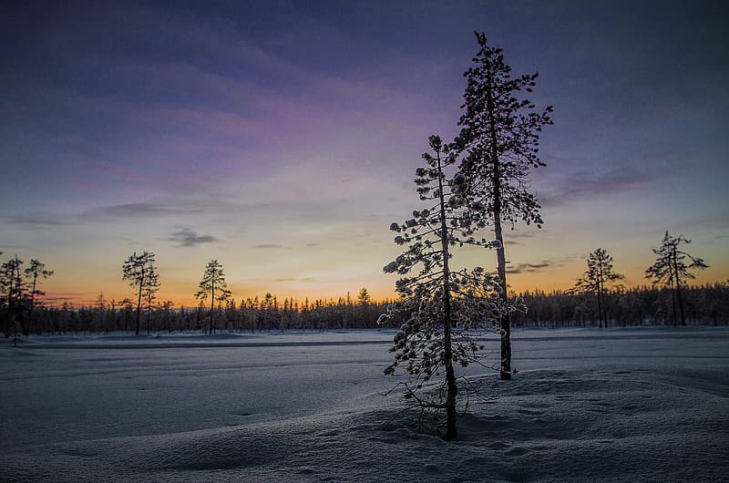 Photo of trees covered on snow during twilight
