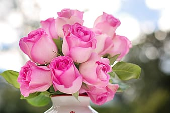 Pink rose flower arrangement
