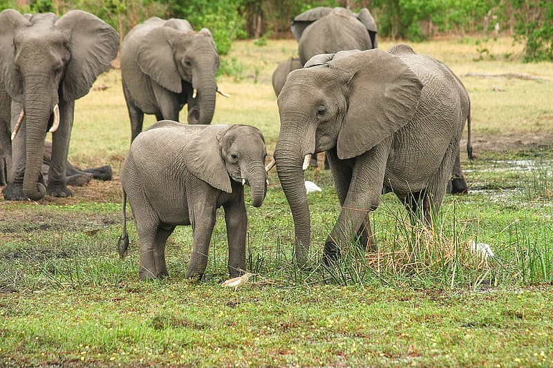 Elephants on green grass field
