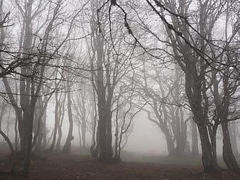 Photo of lifeless trees with fog