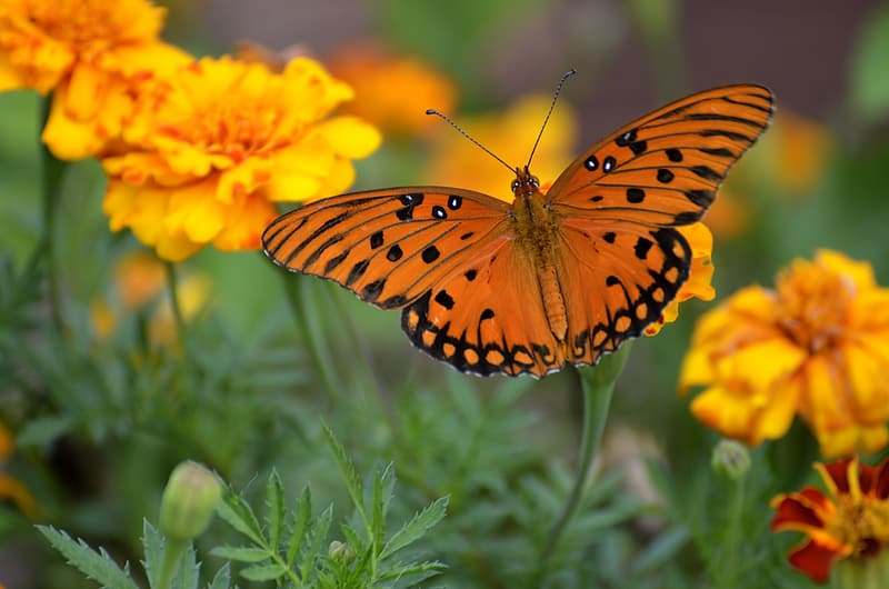 Orange and black butterfly close-up photo
