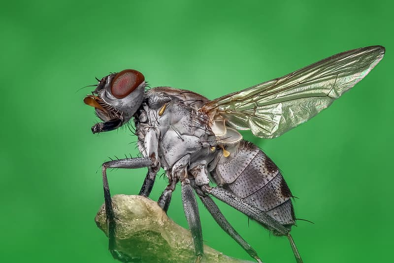 Close-up photography of gray and brown common housefly