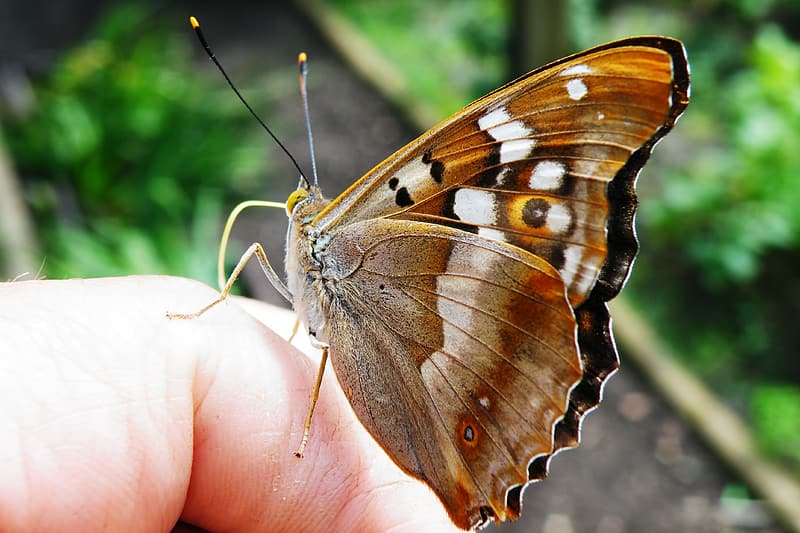 Closeup photography of brown butterfly on human finger