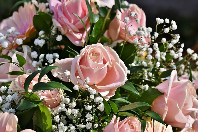 Pink roses with white babys breath flowers