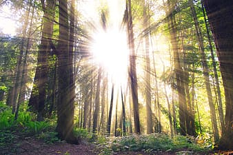 Sunlight coming behind trees
