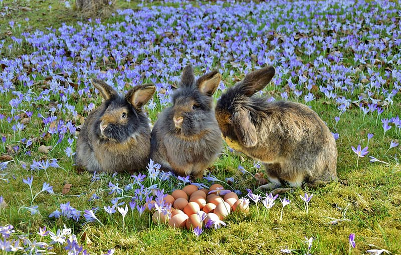 Three brown rabbits near brown eggs and purple flower field at daytime