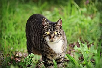 Black and white tabby cat on green grass during daytime