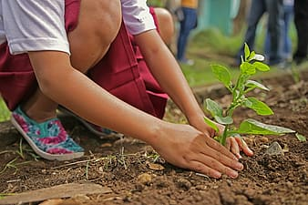 Person planting green plants