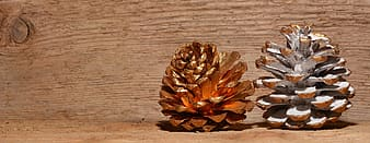 Two brown pinecones
