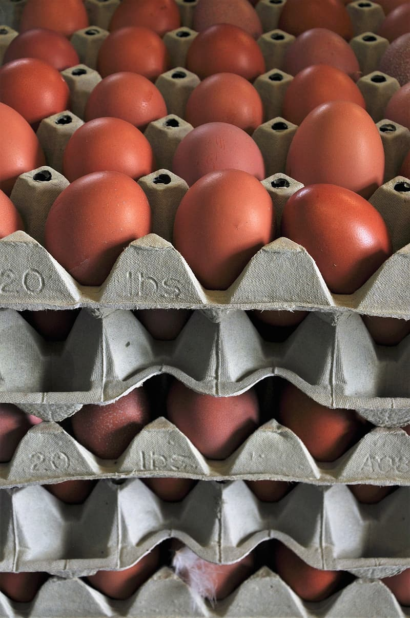 Red egg on gray egg tray