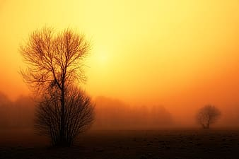 Leafless tree on field during sunset
