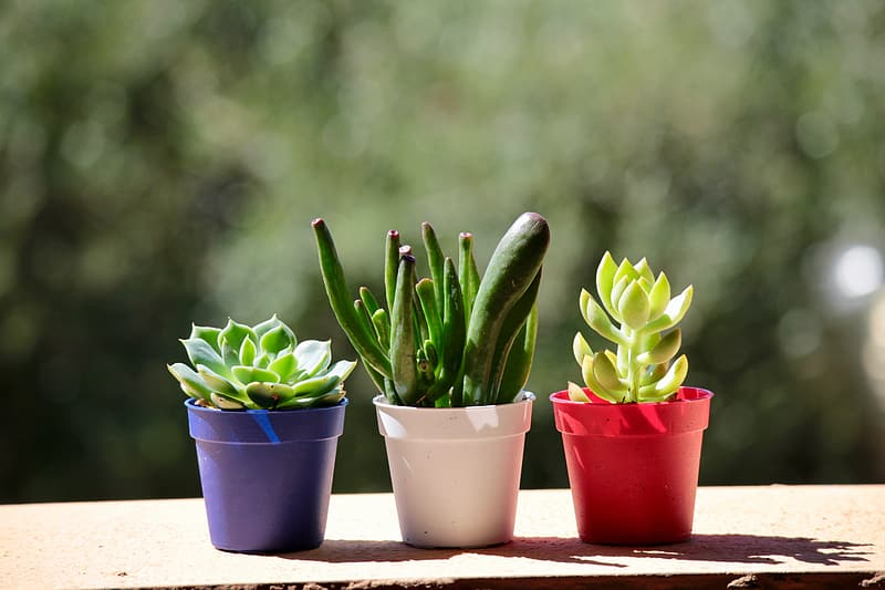 Three assorted succulent plants in assorted-color pots