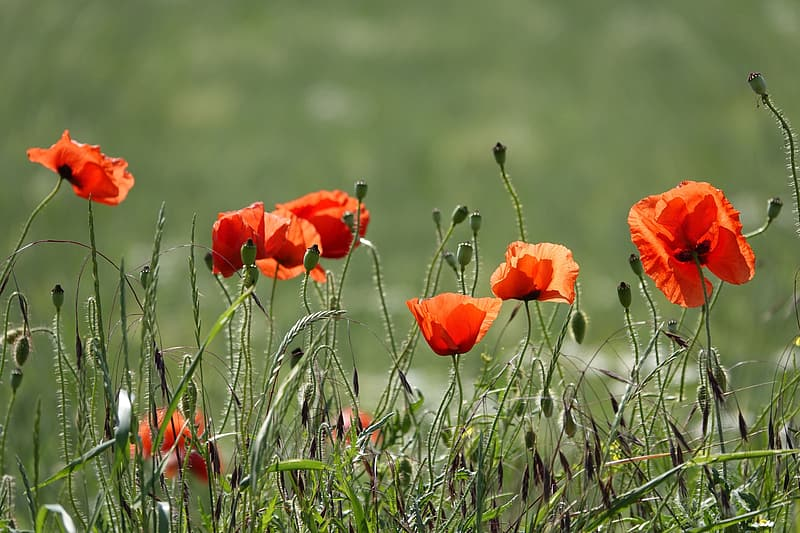 Red flower in green grass during daytime