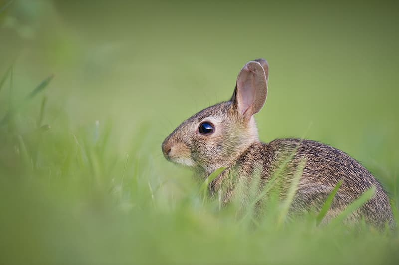 Brown hare on green grass at daytime