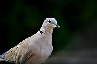 White and brown bird in close up photography