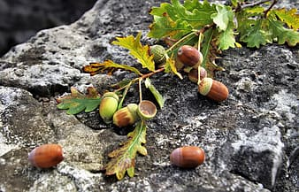 Brown fruit on gray surface