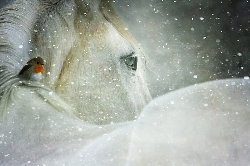 White horse with white wings
