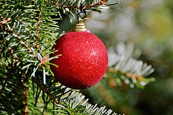 Selective focus photography of red bauble