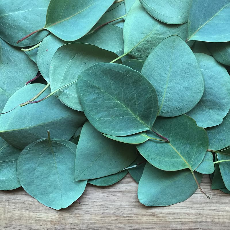 Green leaf lot on brown wooden surface \