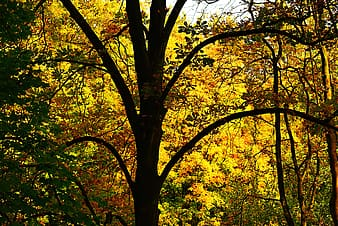 Yellow and green leaf trees