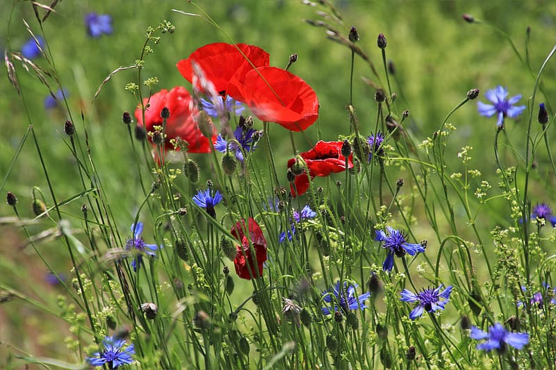 Red and purple flowers in bloom during daytime