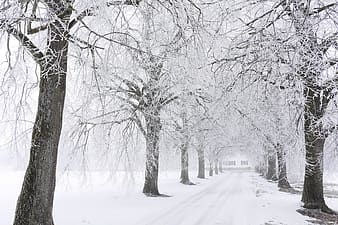 Snow covered pathway between bare trees during daytime
