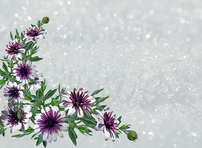 Purple flowers with water droplets