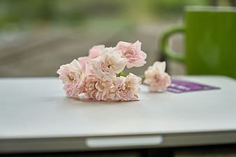 Pink flower on white table