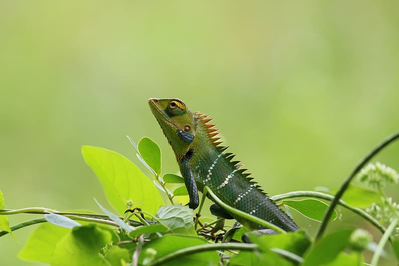 Green and brown bearded dragon on green leaf plant