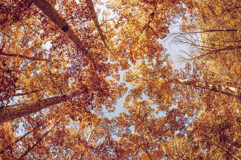 Low angle photography of yellow leaf tree