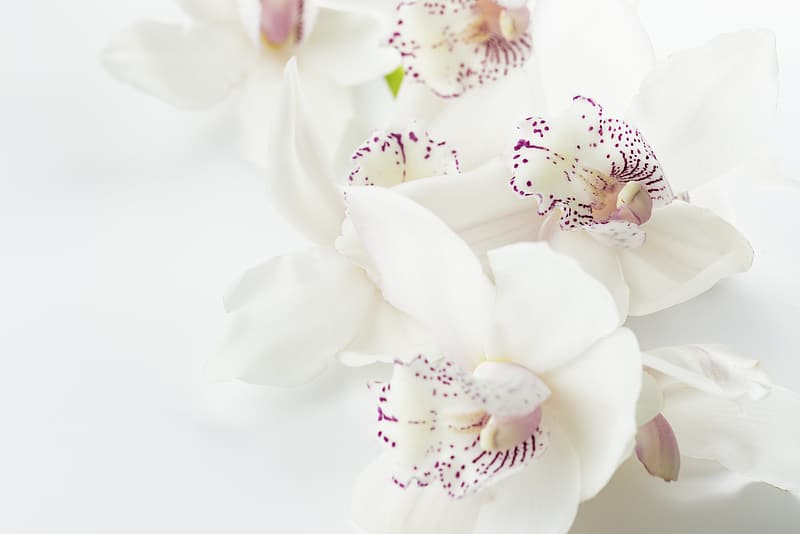 White-and-purple orchids closeup photography