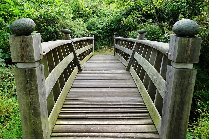 Wooden bridge over body of water surrounded by trees