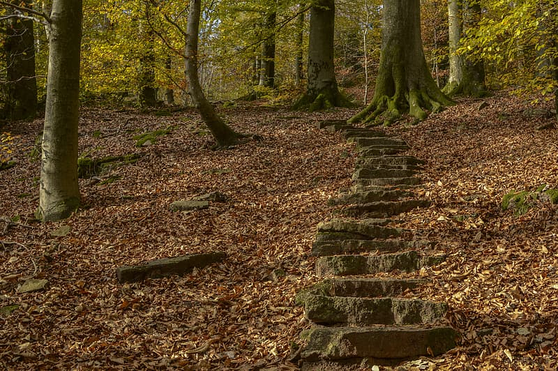 Brown stone stairs on forest