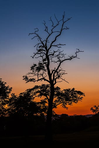 Silhouette photo of trees photography