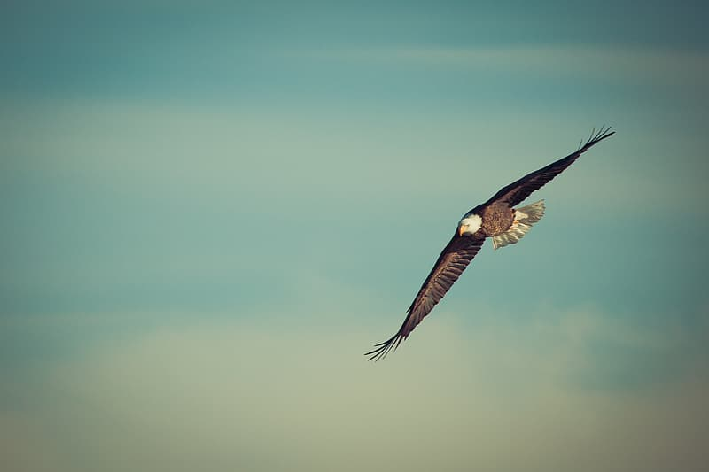 Selective focus photo of bald eagle spreading wings over skies