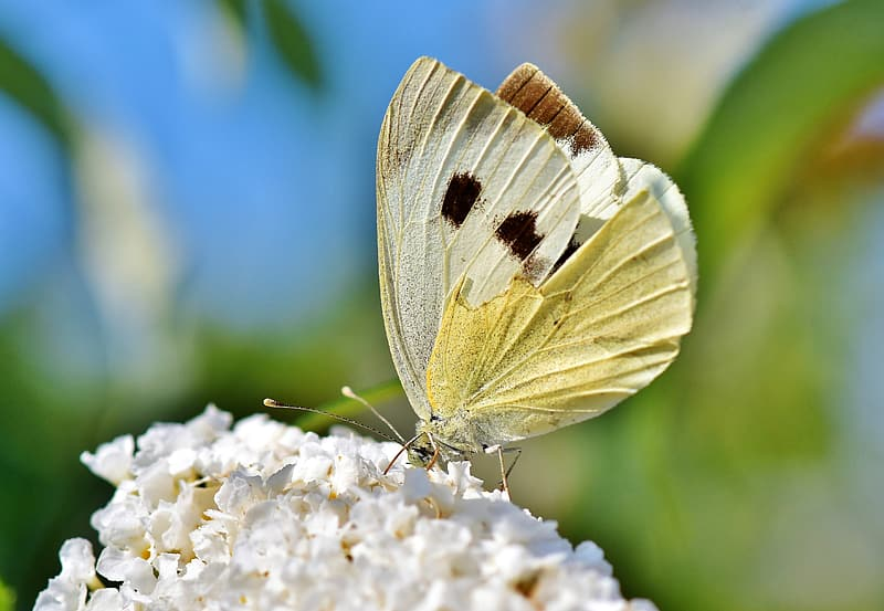 White and green butterfly on brown wooden stick during daytime