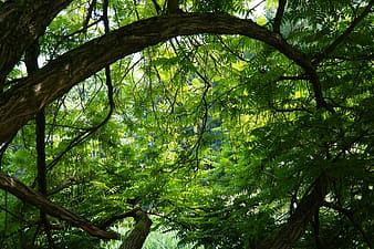 Green leafy tree at daytime