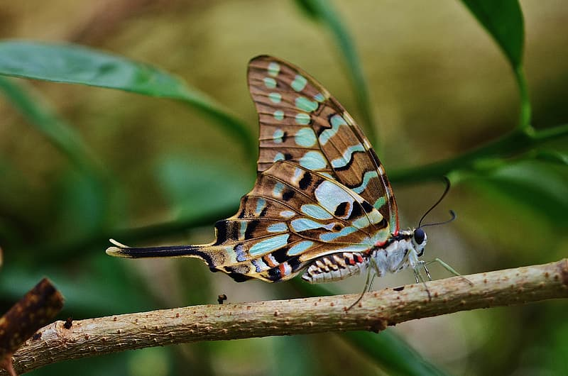 Close-up photo of brown and teal butterfly