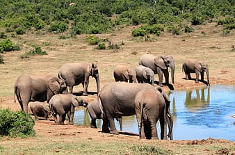 Group of brown elephants during day time