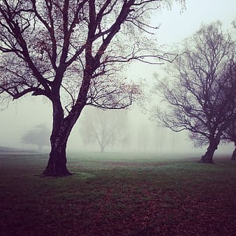 Photo of bare trees with fog